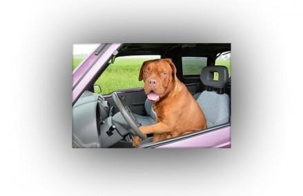 Psi transport