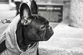 Pies w wielkim mieście