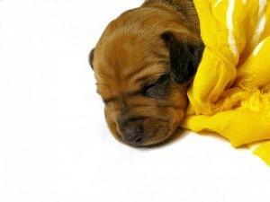 cute-cute-dog---1_2921489
