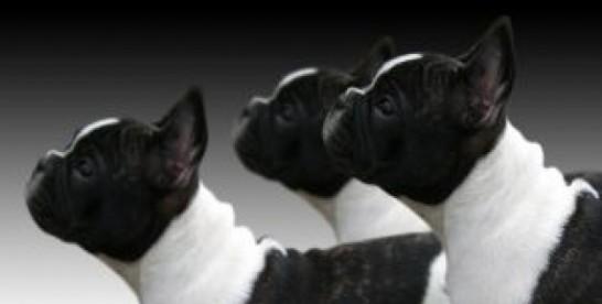 Ufaj psiej intuicji
