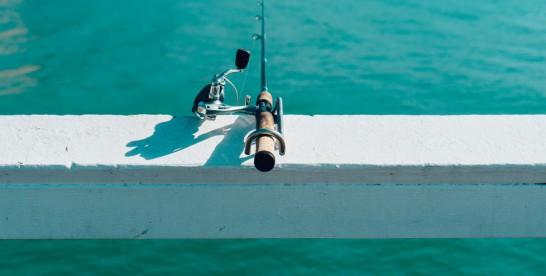 Buldog francuski osobiście poluje na ryby
