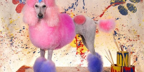 Salon piękności dla psa