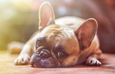 Czy już wiesz, jak uchronić psa przed upałem?