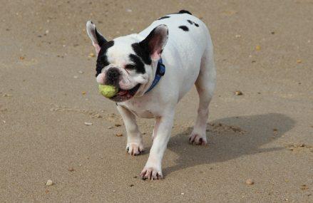 Importowane zabawki z Chin dla psa
