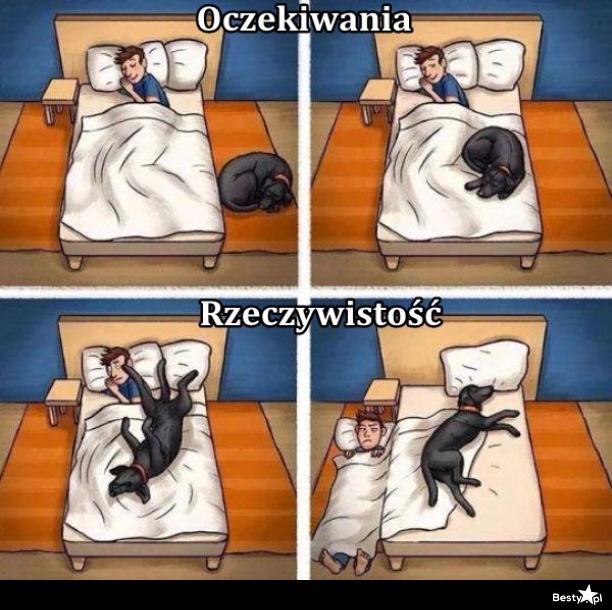 pies w sypialni