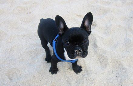 10 powodów, aby zabrać ze sobą psa na wakacje
