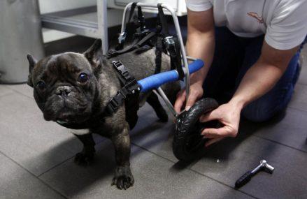 Testowanie kosmetyków na zwierzętach (Lista firm testujących na zwierzętach 2018)