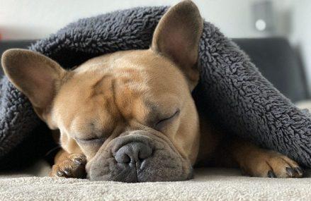 Jak często chodzić z psem do weterynarza?